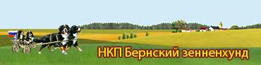 Сайт НКП Бернский зенненхунд